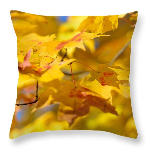Nature Throw Pillow featuring the photograph Fall Colors by Sebastian Musial