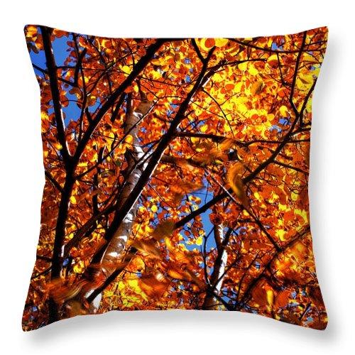 Ranch Golden Elevator Grain Bins Throw Pillow featuring the photograph Fall Colours by David Matthews
