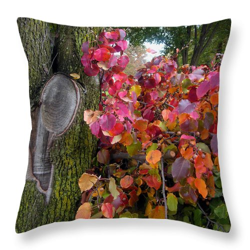 Fall Trees Throw Pillow featuring the photograph Fall Composition by John Lautermilch