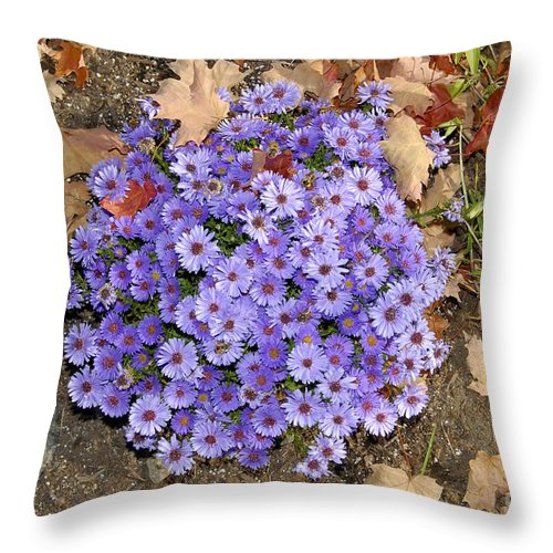 Fall Throw Pillow featuring the photograph Fall Flowers by David Lee Thompson