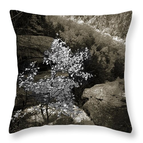 Nature Throw Pillow featuring the photograph Fall Foliage by Yuri Lev