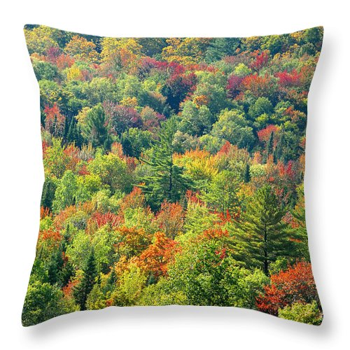 Adirondack Mountains Throw Pillow featuring the photograph Fall Forest by David Lee Thompson