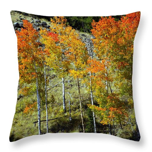 Throw Pillow featuring the photograph Fall In Colorado by Marty Koch