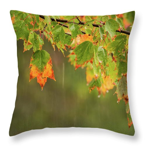 Terry D Photography Throw Pillow featuring the photograph Fall-ing Rain Square by Terry DeLuco