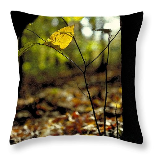 Leaf Throw Pillow featuring the photograph Fall Leaf And Twig by Thomas Firak