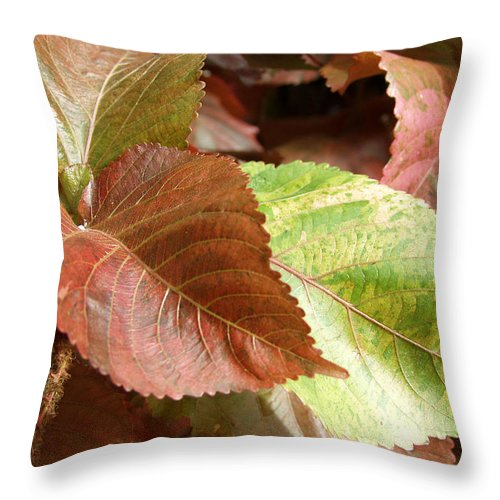 Fall Throw Pillow featuring the photograph Fall Leaves by Carol Sweetwood
