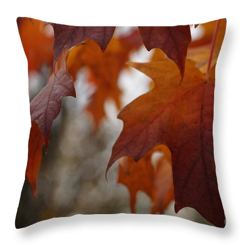 Autumn Throw Pillow featuring the photograph Fall by Linda Shafer