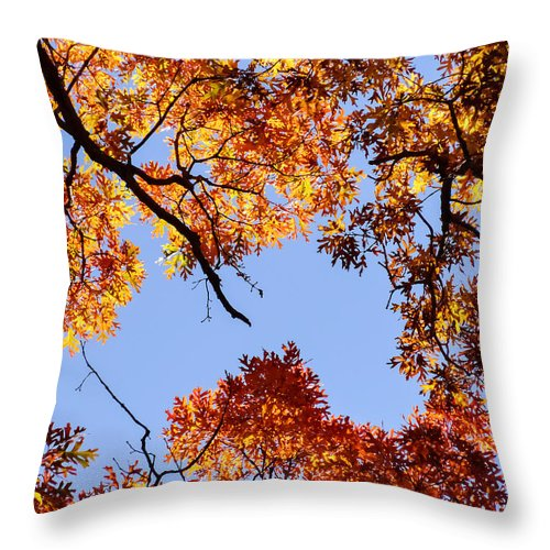 Fall Oak Leaves Up Above Throw Pillow featuring the photograph Fall Oak Leaves Up Above by Cynthia Woods