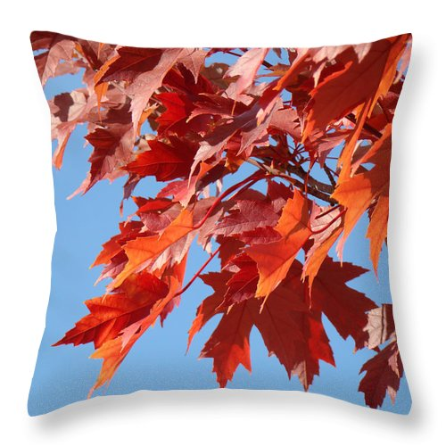 Autumn Throw Pillow featuring the photograph Fall Red Orange Leaves Blue Sky Baslee Troutman by Baslee Troutman
