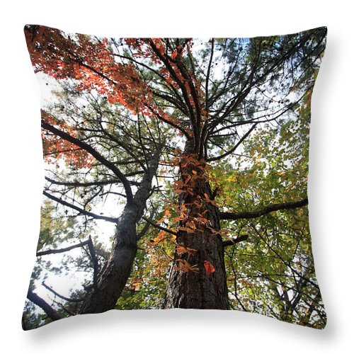 Trees Throw Pillow featuring the photograph Fall Tall by Mary Haber