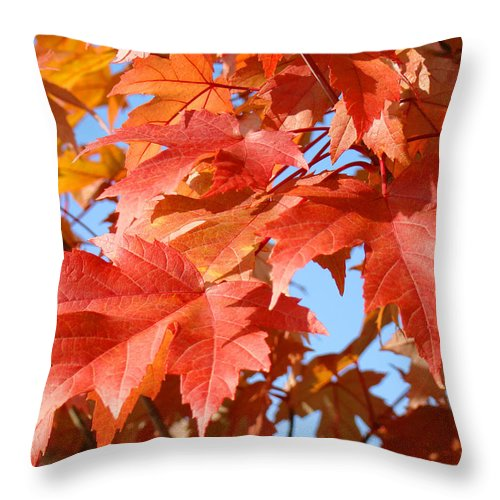 Nature Throw Pillow featuring the photograph Fall Tree Leaves Art Prints Blue Sky Autumn Baslee Troutman by Baslee Troutman