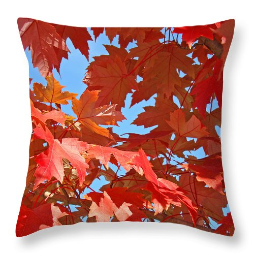 Autumn Throw Pillow featuring the photograph Fall Tree Leaves Red Orange Autumn Leaves Blue Sky by Baslee Troutman