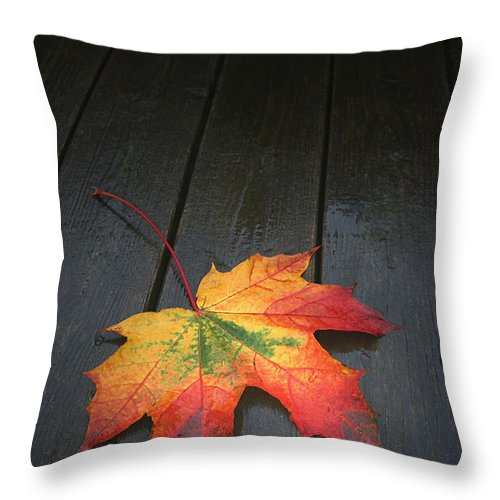 Leaf Autumn Fall Rain Color Throw Pillow featuring the photograph Fall by Winston Rockwell