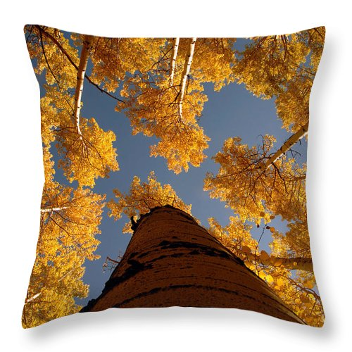 Fall Throw Pillow featuring the photograph Falling Sky by David Lee Thompson
