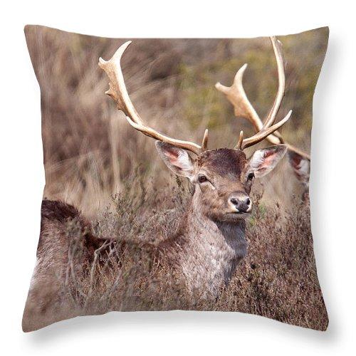 Fallow Deer Throw Pillow featuring the photograph Fallow Deer Buck by Bob Kemp