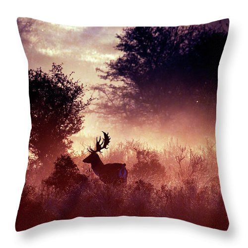 Deer Throw Pillow featuring the photograph Fallow Deer In Fairytale World by Roeselien Raimond