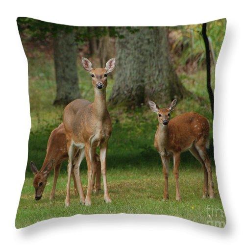 Deer Throw Pillow featuring the photograph Family Walk by Grace Grogan