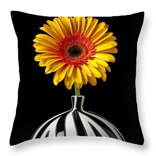 Daisy Flower Vase Petals Yellow Throw Pillow featuring the photograph Fancy Daisy In Stripped Vase by Garry Gay