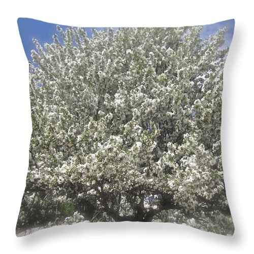 Blooming Tree Throw Pillow featuring the photograph Fanfare by Elizabeth Tillar