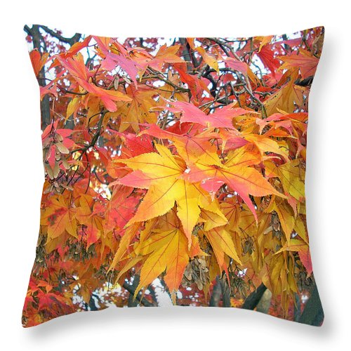 Fall Pictures Autumn Pictures Fall Leaves Painting Yellow Paintings Fall Colors Painting Greeting Card Painting Seasonal Painting Seasons Painting Botanical Painting Tree Painting Throw Pillow featuring the photograph Fantasy Of Fall by Karin Dawn Kelshall- Best