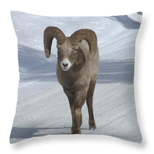 Bighorn Sheep Throw Pillow featuring the photograph Farewell To The King by Tiffany Vest