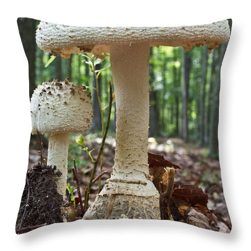 Cumberland Throw Pillow featuring the photograph Father And Son Mushrooms by Douglas Barnett