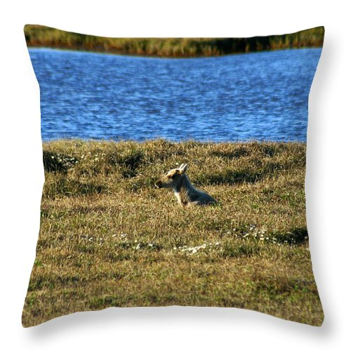 Caribou Throw Pillow featuring the photograph Fawn Caribou by Anthony Jones