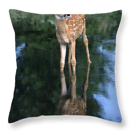 Deer Throw Pillow featuring the photograph Fawn Reflection by Sandra Bronstein