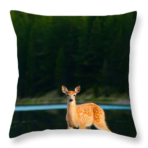 2006 Throw Pillow featuring the photograph Fawn by Sebastian Musial