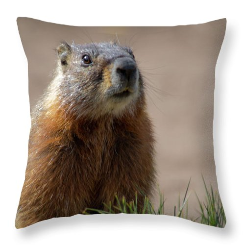 Wyoming Throw Pillow featuring the photograph Fearless by Frank Madia