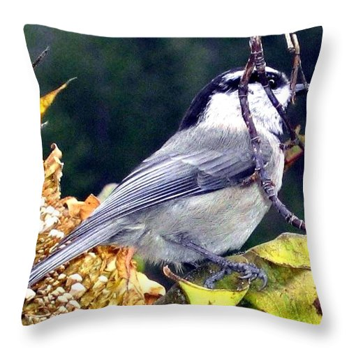 Autumn Throw Pillow featuring the photograph Feast For A Chickadee by Will Borden
