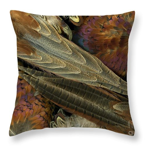 Pheasant Throw Pillow featuring the photograph Featherdance by Christian Slanec