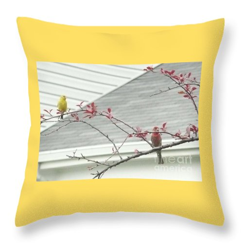Birds Throw Pillow featuring the photograph Feathered Friends by Barb Montanye Meseroll