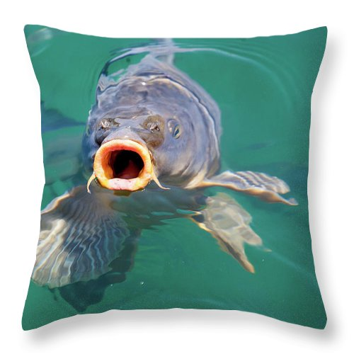Feed Me Throw Pillow featuring the photograph Feed Me by Anthony Jones
