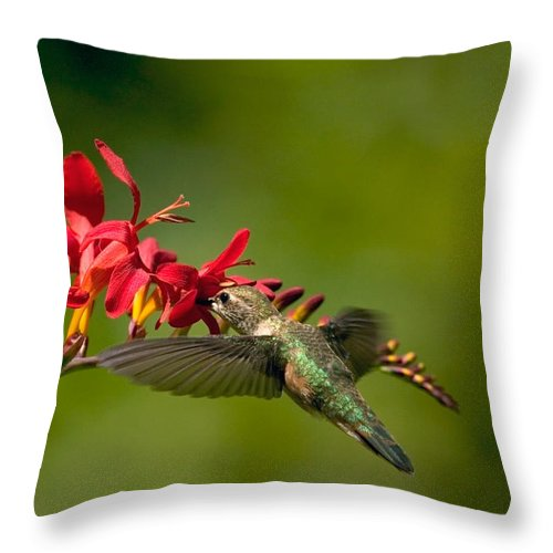 Floral Throw Pillow featuring the photograph Feeding Hummer by Randall Ingalls