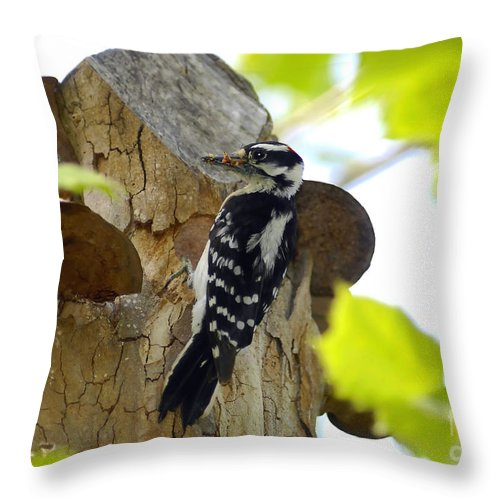 Downy Woodpecker Throw Pillow featuring the photograph Feeding Time by David Lee Thompson