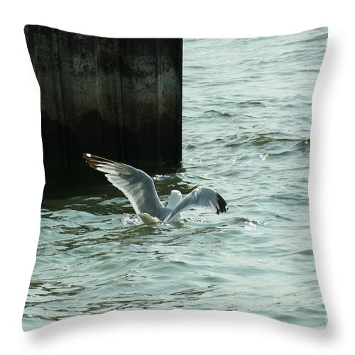 Ephriam Throw Pillow featuring the photograph Feeding Time In Ephraim Wi by Tommy Anderson