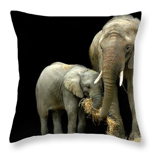 Elephant Throw Pillow featuring the photograph Feeding Time by Stephie Butler