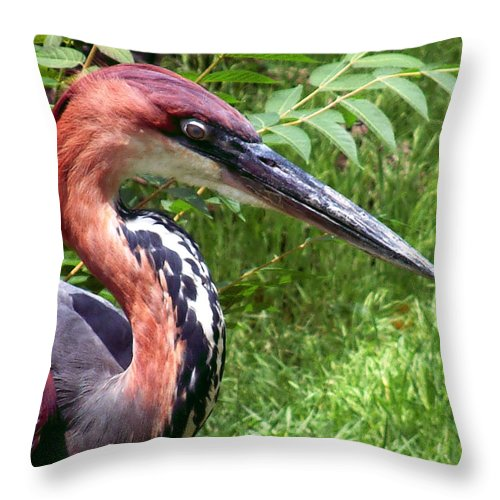 Bird Throw Pillow featuring the photograph Feeling A Bit Peckish by RC DeWinter