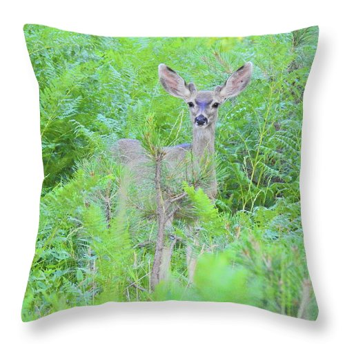 Deer Throw Pillow featuring the photograph Feeling Safe by Sandra O'Toole