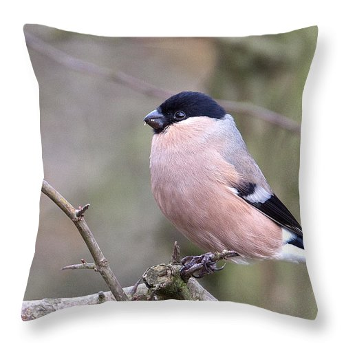 Bullfinch Throw Pillow featuring the photograph Female Bullfinch by Bob Kemp