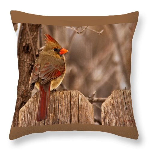 Northern Cardinal Throw Pillow featuring the photograph Female Cardinal On The Fence by Edward Peterson