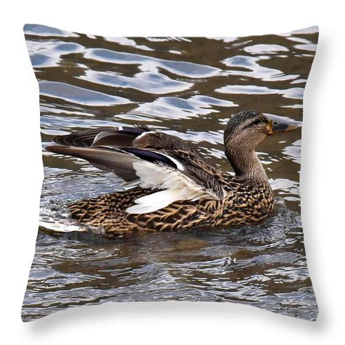 Duck Throw Pillow featuring the photograph Female Mallard Duck 5306c by Cynthia Staley