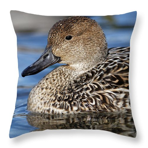 Duck Throw Pillow featuring the painting Female Mallard by Sue Harper