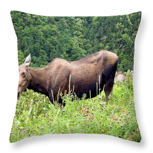 Moose Throw Pillow featuring the photograph Female Moose by Steve Somerville