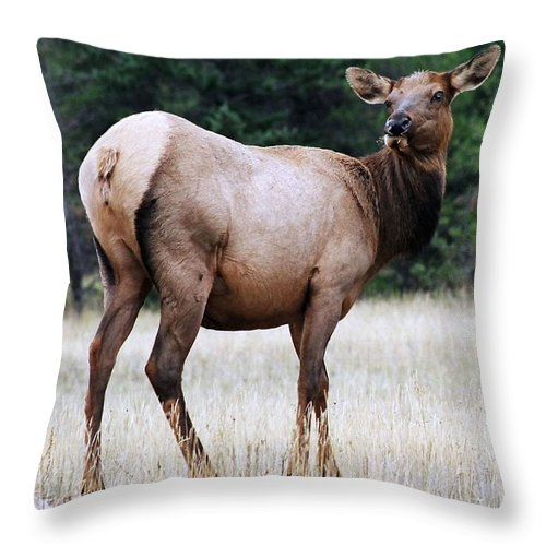 Elk Throw Pillow featuring the photograph Feme Elk by Tiffany Vest