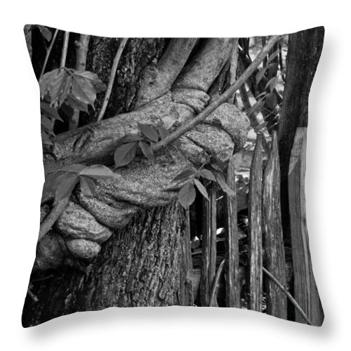 Fence Throw Pillow featuring the photograph Fence In The Tropics by Douglas Barnett