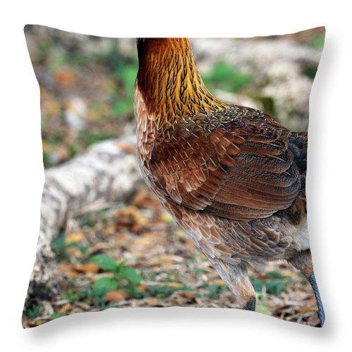 Feral Bird Throw Pillow featuring the photograph Feral Bird by Jennifer Robin