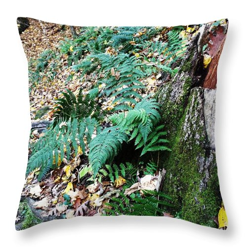 Fern Throw Pillow featuring the photograph Fern And Moss I by Anna Villarreal Garbis