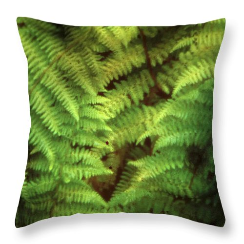 Nature Fusion Throw Pillow featuring the photograph Fern by Arla Patch
